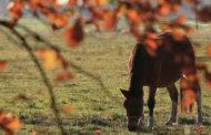 Россия и Монголия будут сотрудничать в разведении лошадей Пржевальского