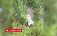В Дагестане неизвестные убили женщину, заподозрив в заражении ВИЧ