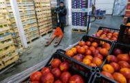 Россельхознадзор может запретить ввоз всех овощей и фруктов из Турции на следующей неделе