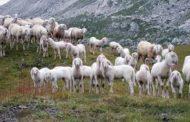 Власти Дагестана обязывают фермеров участвовать в сельхозпереписи