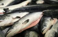 Россельхознадзор предупреждает о появлении старой рыбы на российском рынке