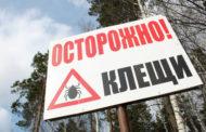 В России обработали от клещей 117 тысяч гектаров парков и скверов