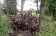 Эльтавский лес снова бомбят…