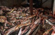 В Тарумовском районе Дагестана изъяли 105 кг незаконно добытой осетровой рыбы