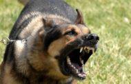 В Санкт-Петербурге уроженец Дагестана спас людей от вооруженного маньяка с собаками