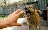 Интервью дагестанца, спасшего жителей Санкт-Петербурга от маньяка с собаками (Видео)