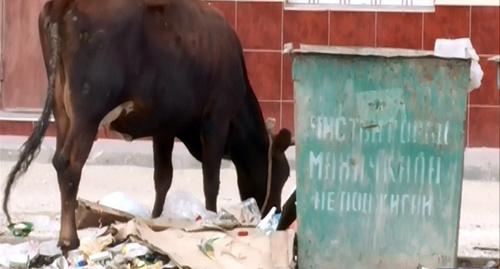 В Махачкале хозяева попавших на штрафстоянку животных пытались их увести, сломав забор