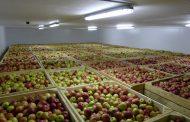 Два овощехранилища на 10 тысяч тонн  появятся до конца года в Дагестане