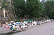 Махачкалинцы опасаются возникновения эпидемий из-за крыс на мусорных свалках