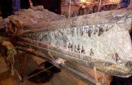 В Дагестане нашли окаменелые кости динозавра