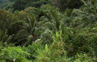 Семья во Вьетнаме более 40 лет скрывалась в джунглях от бомбежек