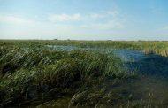Статус природного заказника будет присвоен озеру