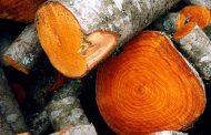 Прокуратурой Магарамкентского района возбуждено уголовное дело по факту вырубки одного дерева