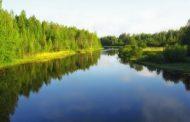 Почти сто человек ищут детей, которых унесло течением реки на Алтае