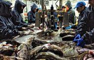 Роскачество выявило подмену трески в магазинах более дешевой рыбой