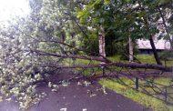 В Москве ураган повалил 300 деревьев, семь человек пострадали