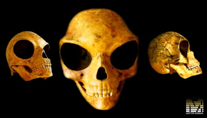 В Дании обнаружен череп пришельца