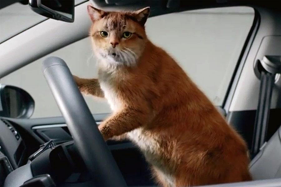 Видео дня: как котики рекламируют автомобили