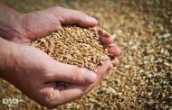 В 2016 году в России ожидают рекордный урожай зерна