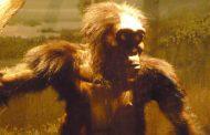 Самый знаменитый предок человека погиб, свалившись с дерева