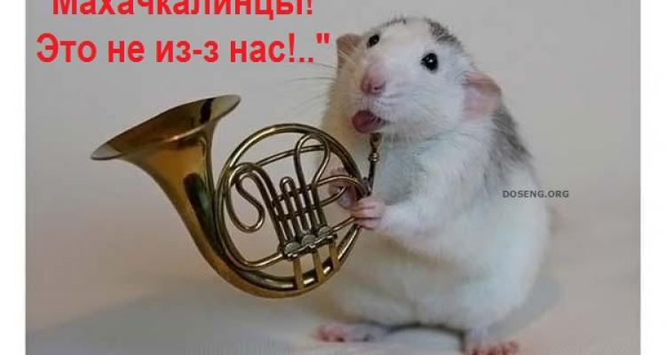 В дагестанском Роспотребнадзоре опровергают сообщения об отравлении махачкалинцев крысиным ядом