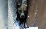 В Дагестане спасатели прессом раздвинули гаражи, чтобы вызволить собаку (Видео)